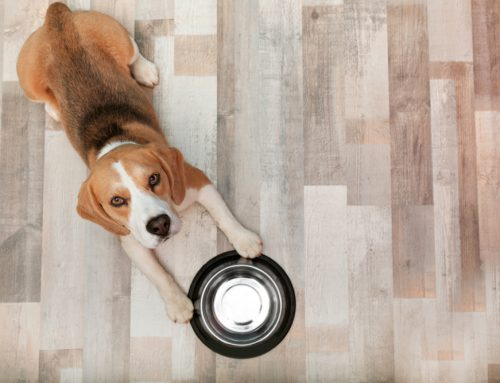 5 Ways to Choose a Healthy Diet for Your Pet