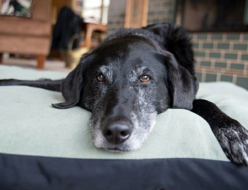 Taking Care of Your Senior Pet's Health
