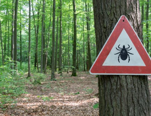7 Things Pet Owners Might Not Know About Lyme Disease