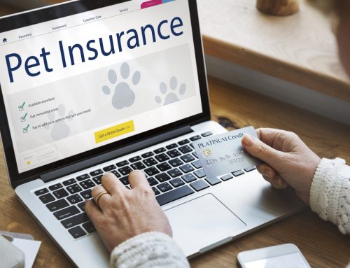 Understand Pet Insurance Before You Buy